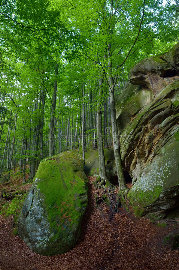 Beautiful spring forest stock photo