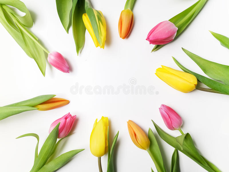 Beautiful spring frame of colorful tulips on white. Background royalty free stock photo