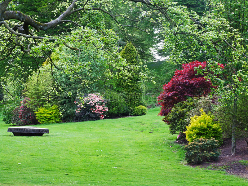 Beautiful spring garden. With azalea flowers royalty free stock images
