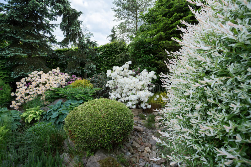 Beautiful spring garden design with rhododendron royalty free stock photo