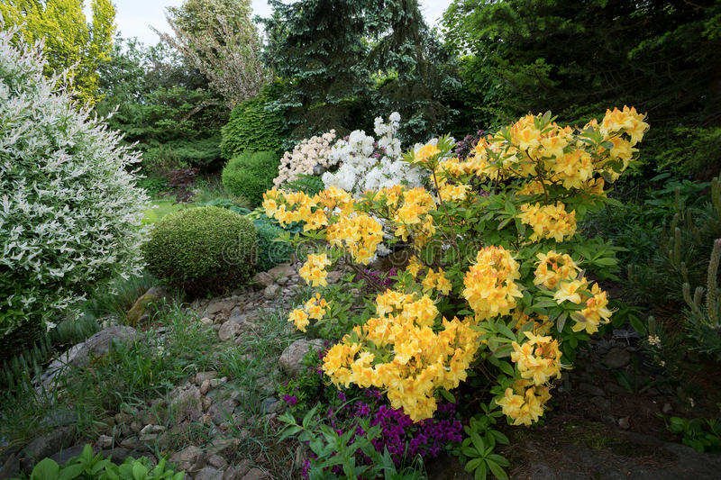 Beautiful spring garden design with rhododendron stock image