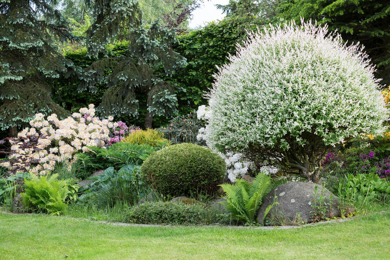 Beautiful spring garden design with rhododendron stock images