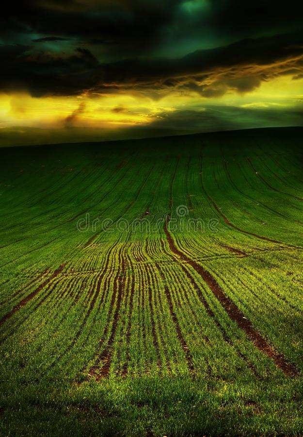 Beautiful Spring Green Field, Clouds before Storm. Beautiful Spring Green Field with Clouds before Storm royalty free stock photos