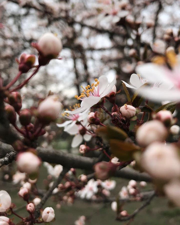 Beautiful spring stock photos