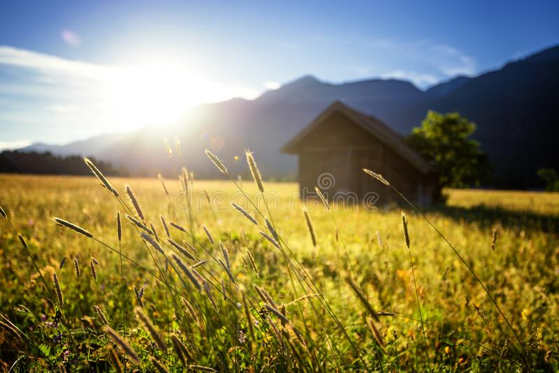 Beautiful spring meadow. Sunny clear sky with hut in mountains. Colorful field full of flowers. Grainau, Germany. Beautiful spring meadow. Sunny clear sky with stock images