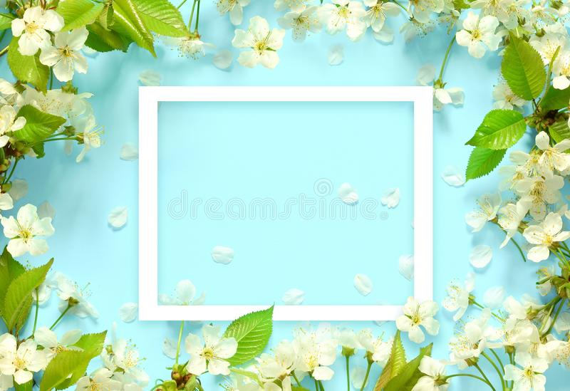 Beautiful spring nature background with lovely blossom, petal a on turquoise blue background , top view, frame. Springtime concept stock photography