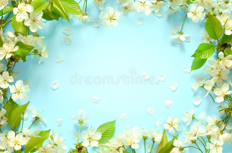 Beautiful spring nature background with lovely blossom, petal a on turquoise blue background , top view, frame. Springtime concept stock photos