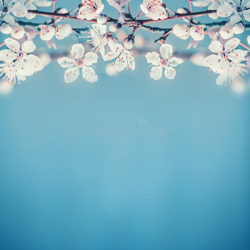 Beautiful spring nature background with white cherry blossom on turquoise blue. Background, place for text stock image