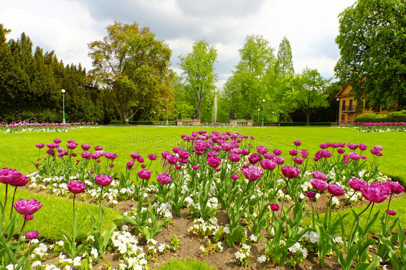 Beautiful spring park royalty free stock image