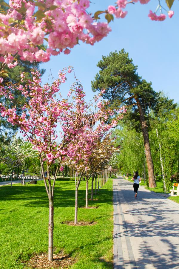 Beautiful spring park landscape with blooming trees. Springtime royalty free stock images