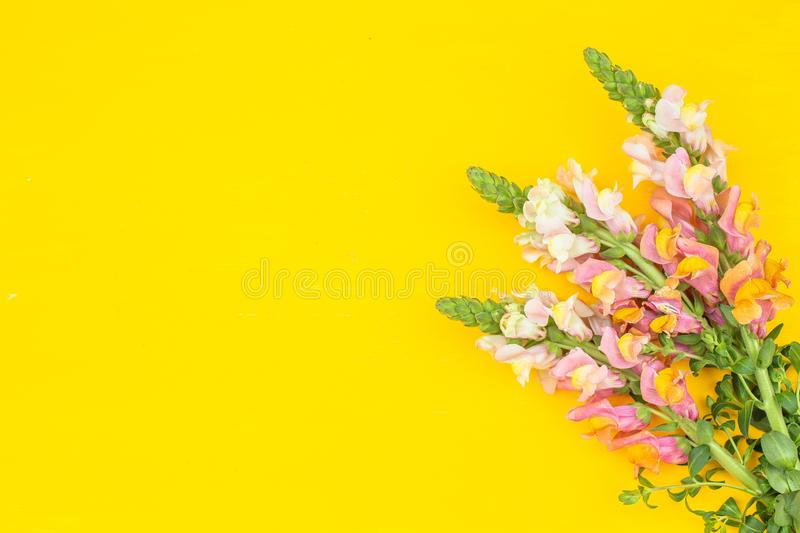 Beautiful spring pink flowers on yellow pastel table top view. Floral border.Flat lay. stock photography