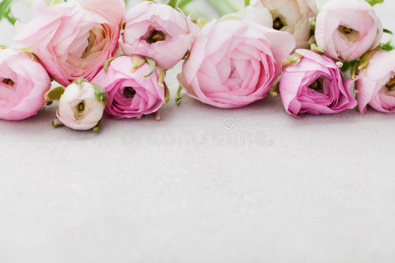 Beautiful spring Ranunculus flowers on gray stone table. Floral border. Pastel color. Greeting card for Valentines or Womans Day. royalty free stock photography