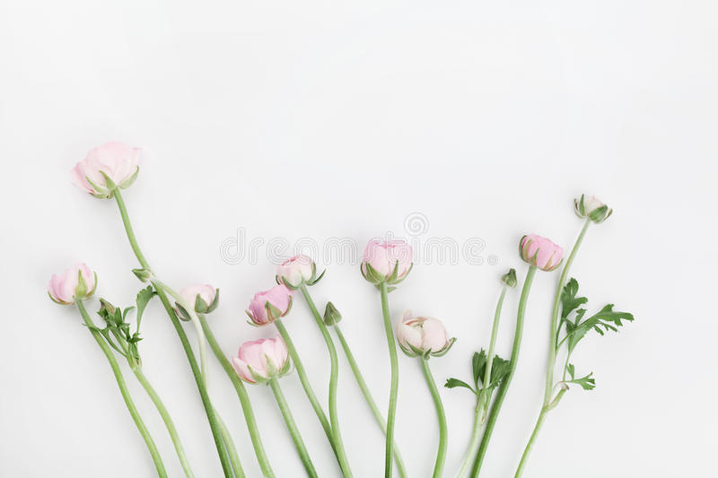 Beautiful spring Ranunculus flowers on white table from above. Floral border. Wedding mockup. Pastel color. Clean space for text. Flat lay style stock photo