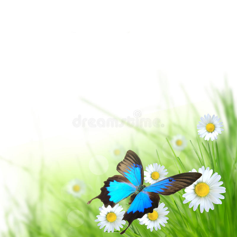 Beautiful spring scenery. With exotic butterfly royalty free stock photos