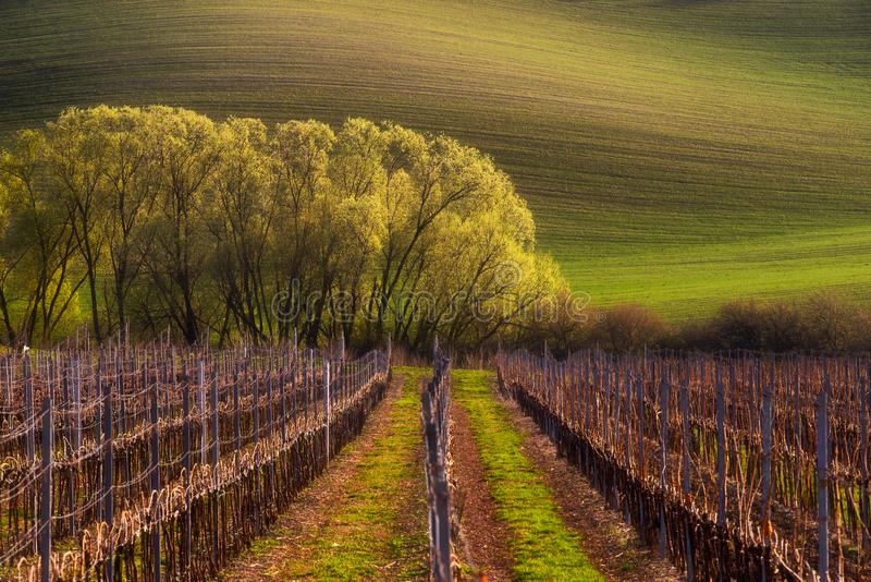 Detail of South Moravian field, Czech republic. Beautiful spring scenery. Detail of South Moravian field. Colorful hill in Czech landscape during sunset, Czech royalty free stock photos