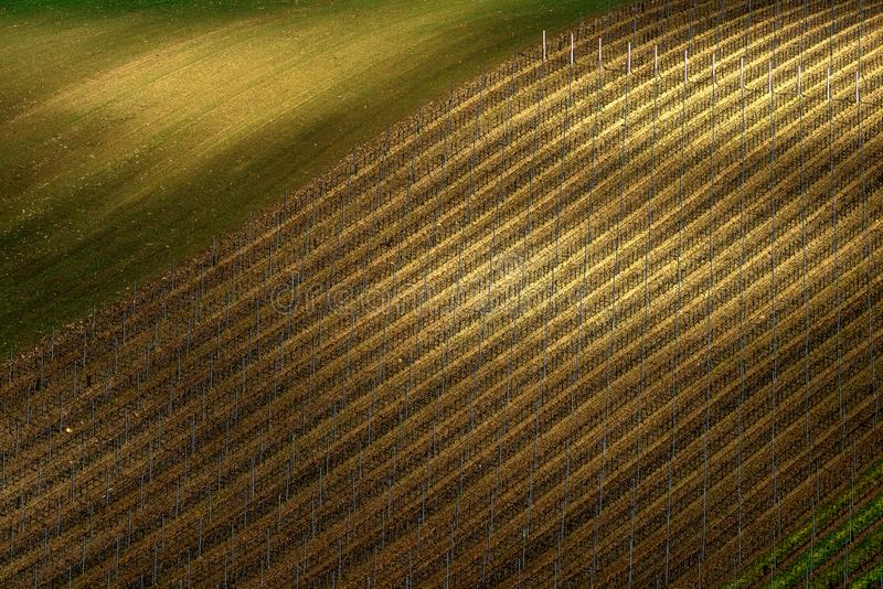 Detail of South Moravian field, Czech republic. stock images