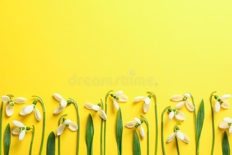 Beautiful spring snowdrop flowers on color background royalty free stock photo