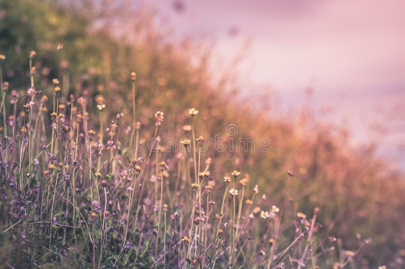 Beautiful spring or summer nature background with fresh grass stock images