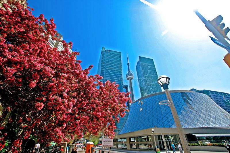 Beautiful spring time in Toronto royalty free stock photography