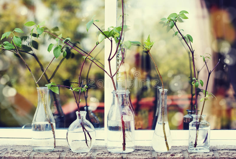 Beautiful spring tree branches in glass bottles on window. Home interior decoration. Toned image. Selective focus. Shallow depth of field royalty free stock photos