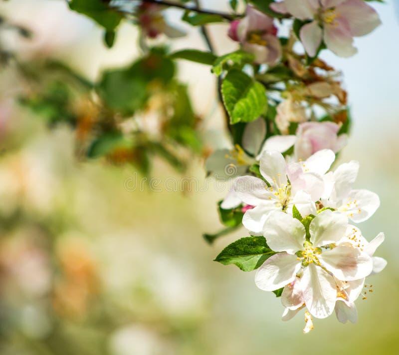 Download Beautiful Spring Tree Royalty Free Stock Photo - Image: 34644765