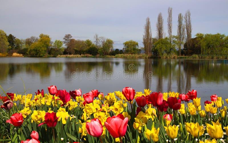 Beautiful spring tulip scene. Multicolour tulips growing alongside a beautiful river scene stock photo