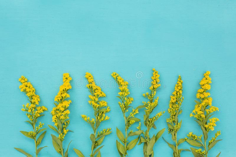 Beautiful spring yellow flowers on blue pastel table top view. Floral border.Flat lay. Beautiful spring yellow flowers on blue pastel table top view. Floral royalty free stock photo