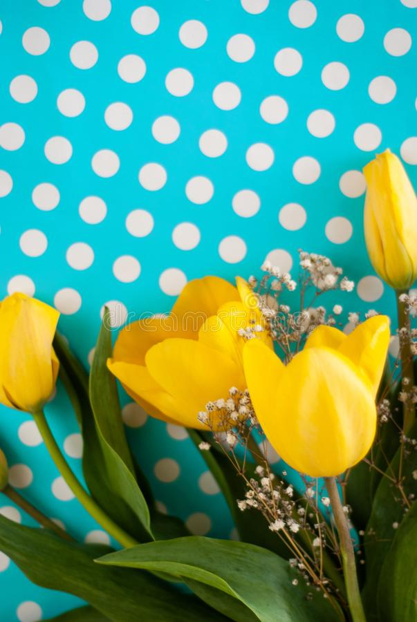 Beautiful spring yellow tulip flowers on blue background stock image