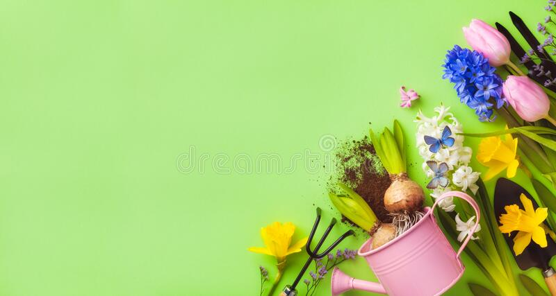 Beautiful springtime background with gardening tools, colorful spring flowers and butterflies. Top view stock image