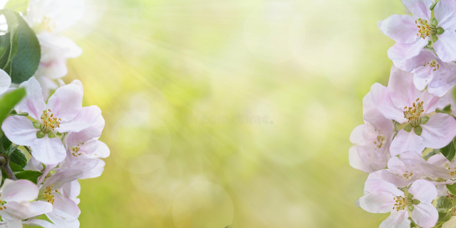 Springtime flowers blooming on sunny and blur light background with copy space. Beautiful springtime flowers blooming on sunny and blur light background with stock photos