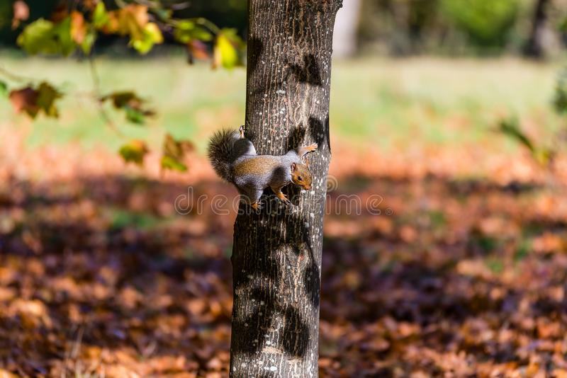 Squirrel on the tree stock images