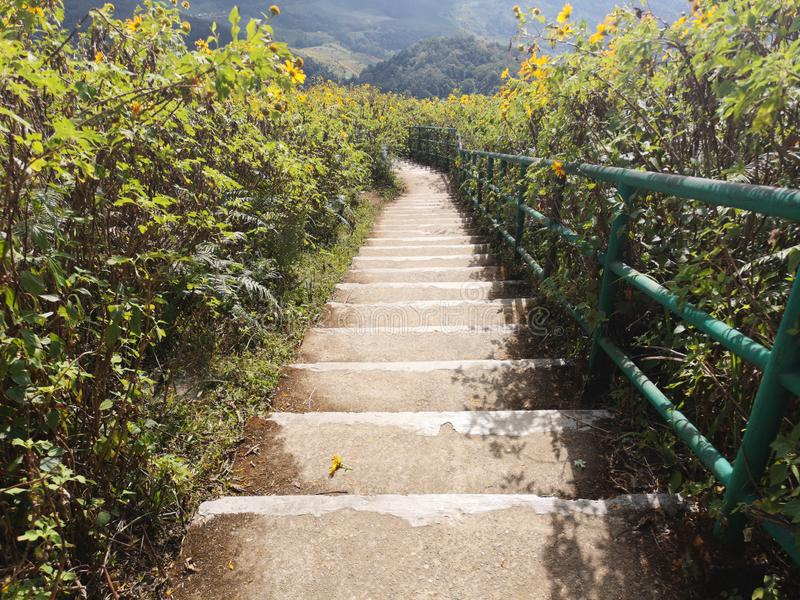 Beautiful stair in the middle of nature with blossoming of wild sunflowers royalty free stock images