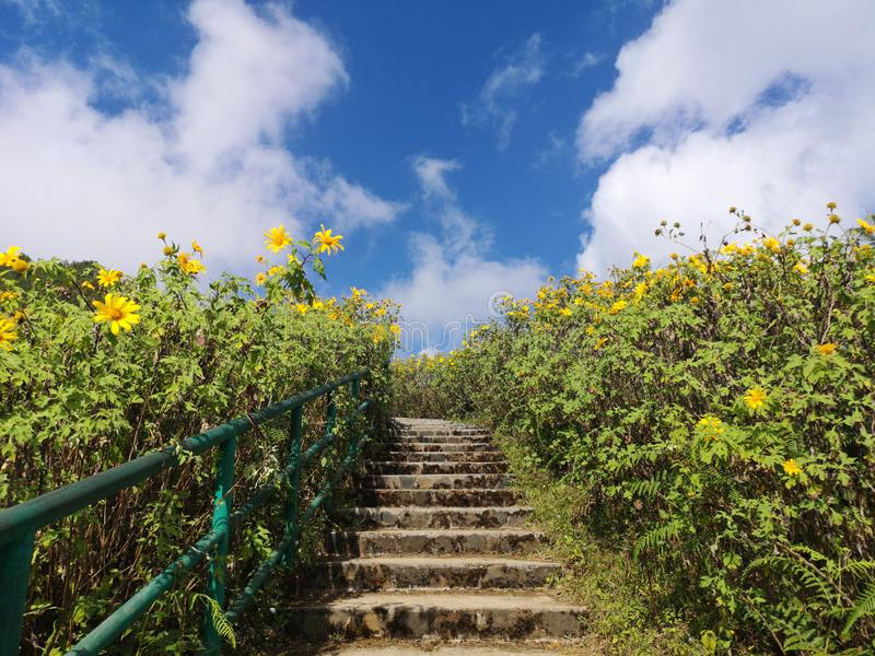 Beautiful stair in the middle of nature with blossoming of wild sunflowers stock image