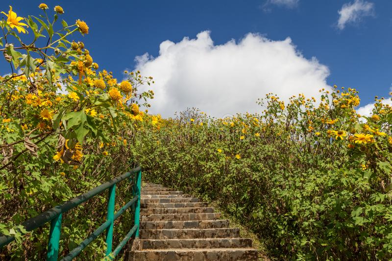 Beautiful stair in the middle of nature with blossoming of wild sunflowers stock photo