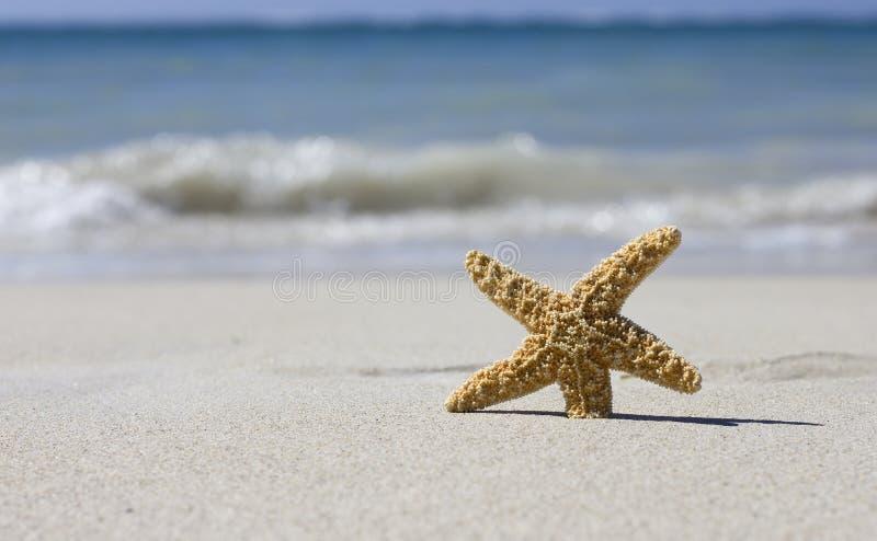 Beautiful starfish stock images