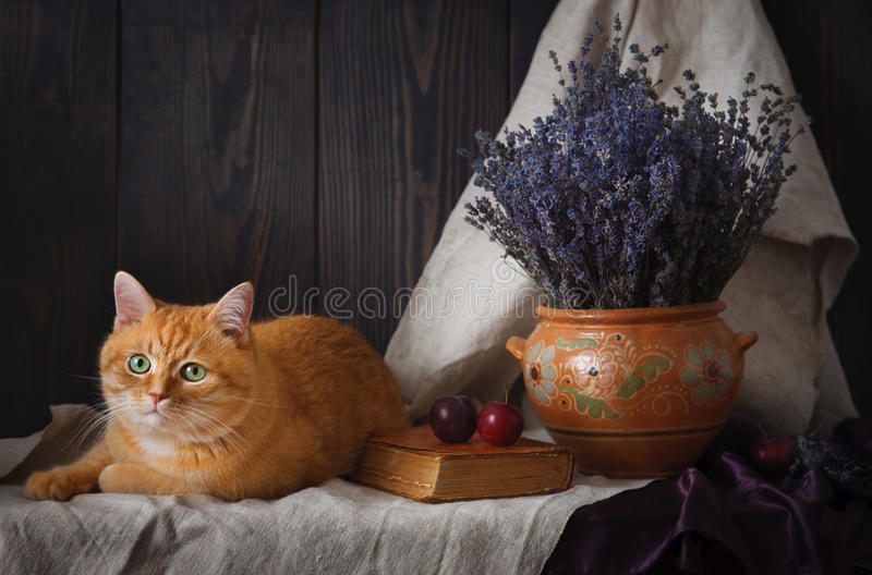 A beautiful still-life with a cat and a bouquet of lavender on a table. royalty free stock photography