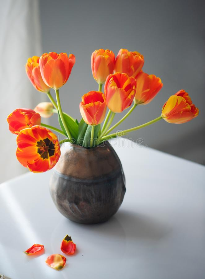 Beautiful still-life with tulips royalty free stock photo