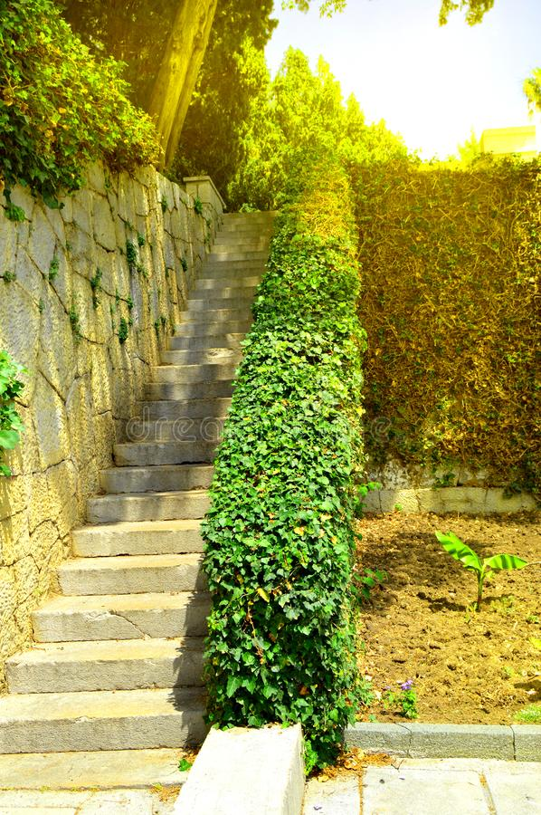 Beautiful stone staircase, steps leading up among the plants and trees in the Park. Path, climb, ladder, green, walk, garden, forest, nature, trail, landscape stock photography