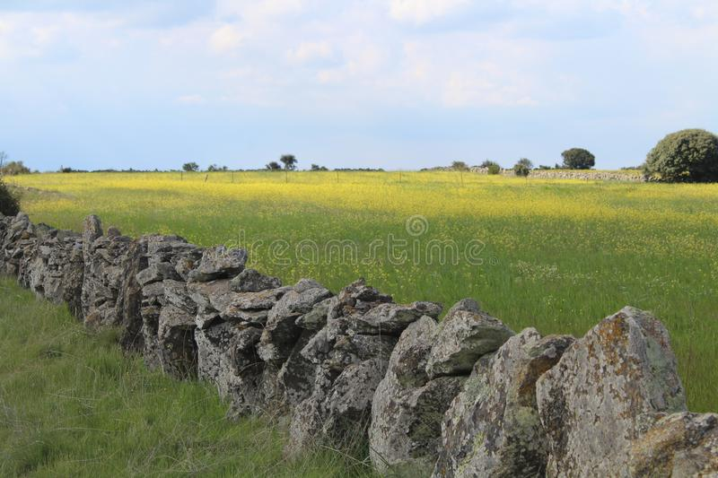 Beautiful stone wall that separates the fields and animals stock photography