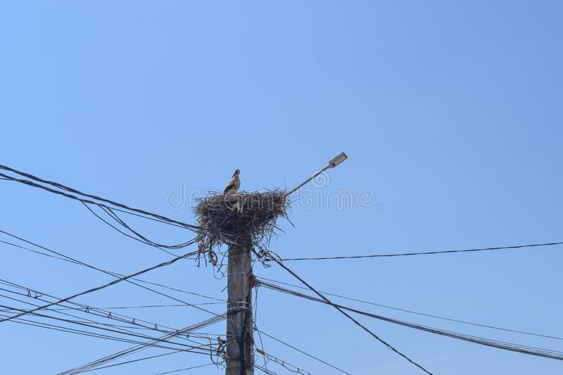 Beautiful stork in her nest on the electricity pillar against the blue sky stock image