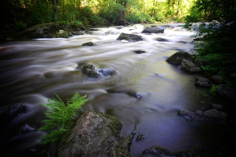 Beautiful  streaming river and fern growing in riverbank scene. Beautiful  streaming river and waterfall and rocks in water scene. Beautiful  streaming river stock image