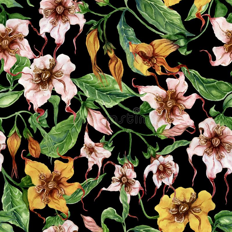 Beautiful strophanthus flowers on climbing twigs on black background. Seamless floral pattern. Watercolor painting. Hand painted. Botanical illustration. Fabric stock illustration