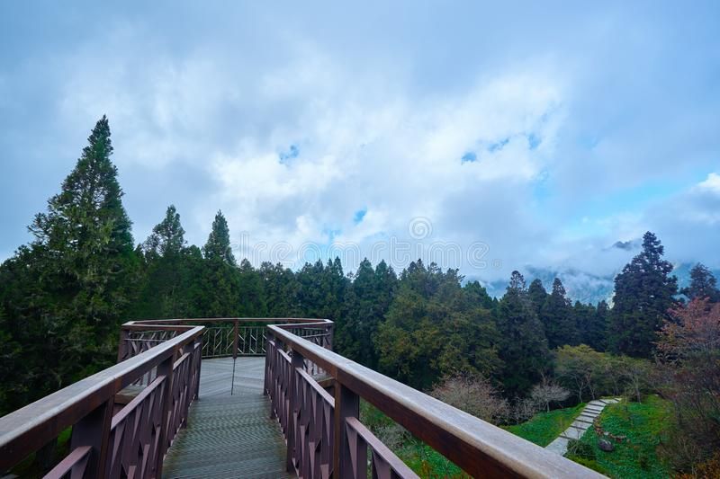 Beautiful stunning natural scenics above walkway in Alishan national forest stock photo