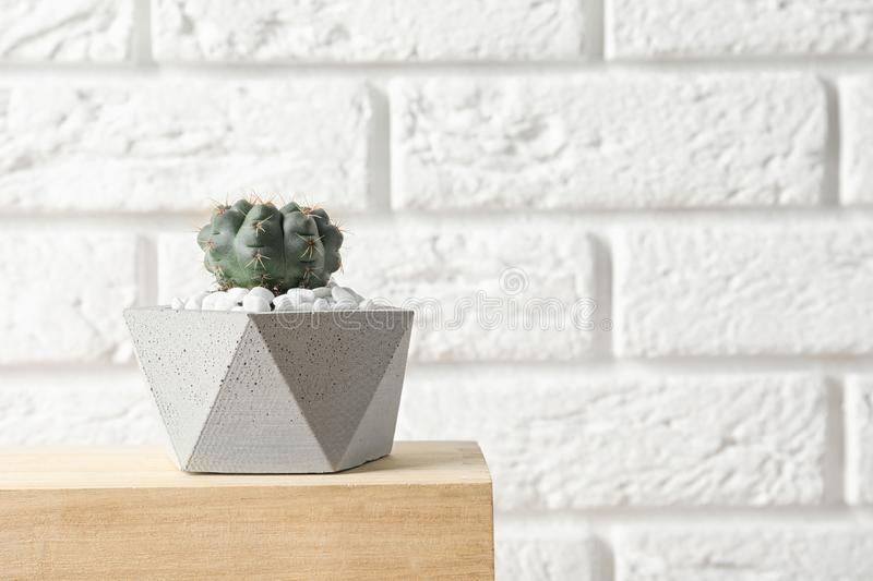 Beautiful succulent plant in stylish flowerpot on wooden table near white brick wall. Home decor. Beautiful succulent plant in stylish flowerpot on wooden table royalty free stock images