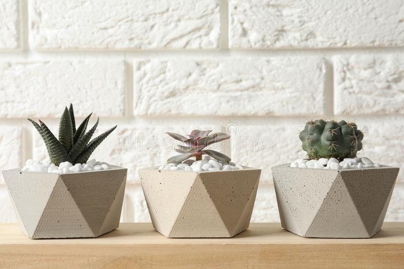 Beautiful succulent plants in stylish flowerpots on wooden table near white brick wall. Home decor royalty free stock photography