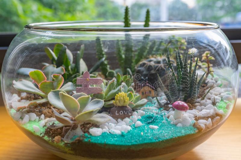 Beautiful succulent terrarium tiny indoor garden filled with colorful sand stock photography