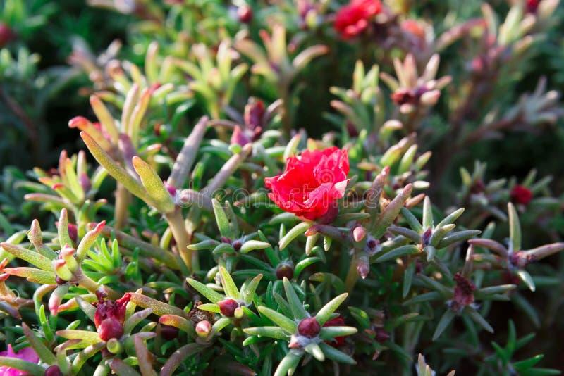 Beautiful summer bush with pink flowers stock image image of flora download beautiful summer bush with pink flowers stock image image of flora leaves mightylinksfo