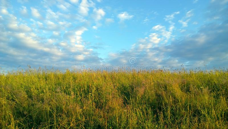 Beautiful summer field in the morning stock image