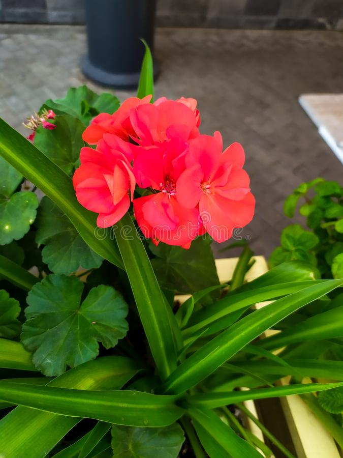Beautiful summer flower in city royalty free stock photography
