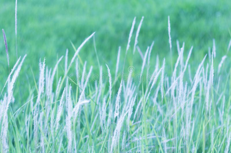 Beautiful summer with flower grass in sunshine day. Soft focus and vintage effect stock photos